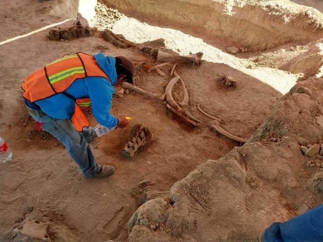 Tìm thấy xương của hàng chục con voi ma mút khổng lồ ở Mexico - 1