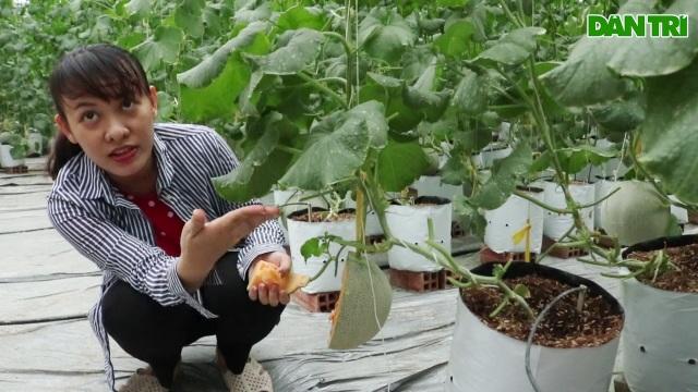 Thạc sĩ nghỉ việc ở cơ quan nhà nước về dọn vườn trồng dưa lưới sạch - 4