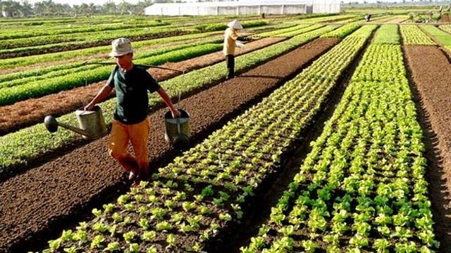 Chính phủ miễn thêm 7.500 tỷ đồng thuế sử dụng đất nông nghiệp/năm - 1