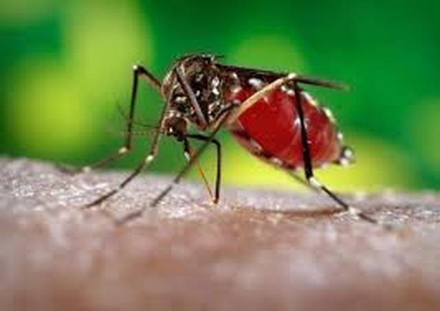 Việt Nam: Ghi nhận ca mắc Zika đầu tiên trong năm 2020