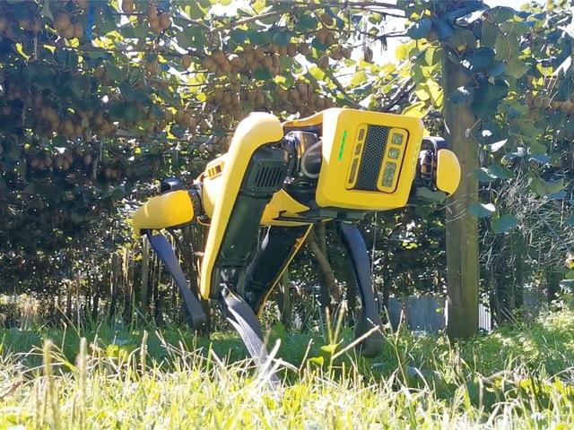 Khi chó chăn cừu là robot - 1