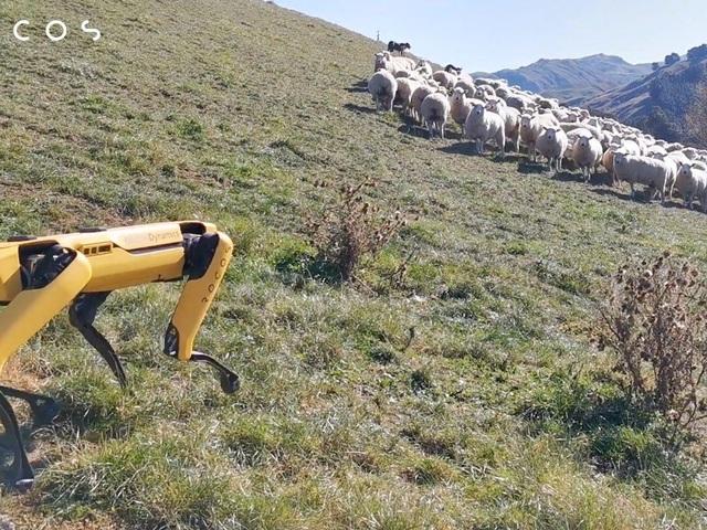 Khi chó chăn cừu là robot - 4