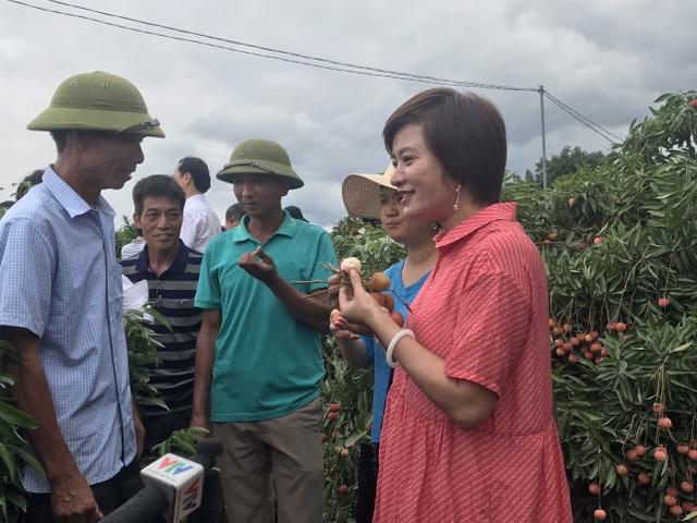 Hàng trăm thương lái Trung Quốc chực chờ, đếm ngày sang Việt Nam mua vải - 3