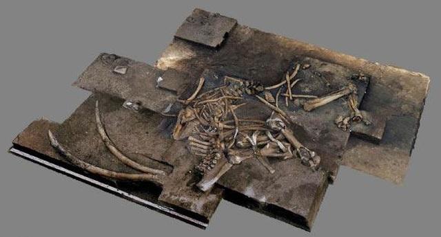 Phát hiện bộ xương voi cổ đại 300.000 năm tuổi ở Đức - 1