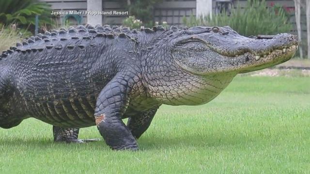 Cặp cá sấu khổng lô ẩu đả suốt gần 2 tiếng mới phân thắng bại - 3