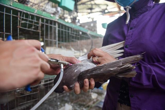 Bỏ nghề lập trình viên về làm nông dân nuôi chim thu 3 tỷ đồng/năm - 9