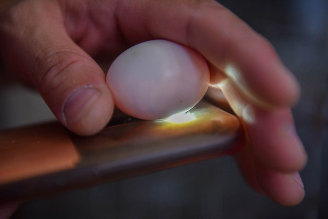 Bỏ nghề lập trình viên về làm nông dân nuôi chim thu 3 tỷ đồng/năm - 11