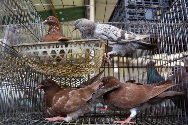 Bỏ nghề lập trình viên về làm nông dân nuôi chim thu 3 tỷ đồng/năm - 3