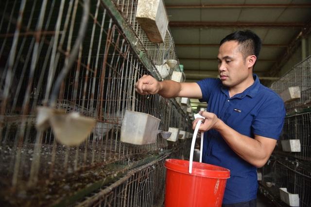 Bỏ nghề lập trình viên về làm nông dân nuôi chim thu 3 tỷ đồng/năm - 8