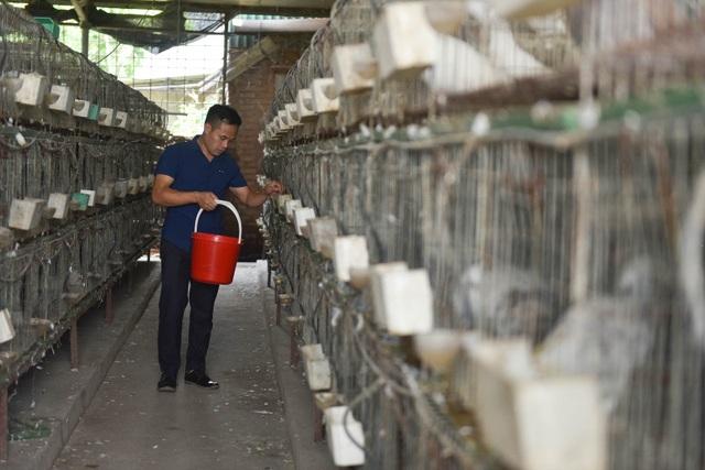 Bỏ nghề lập trình viên về làm nông dân nuôi chim thu 3 tỷ đồng/năm - 1
