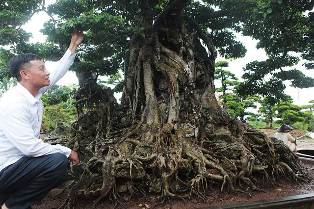 Choáng ngợp cây sanh lá móng cổ thụ giá chục tỷ ở Hà Nội - 5