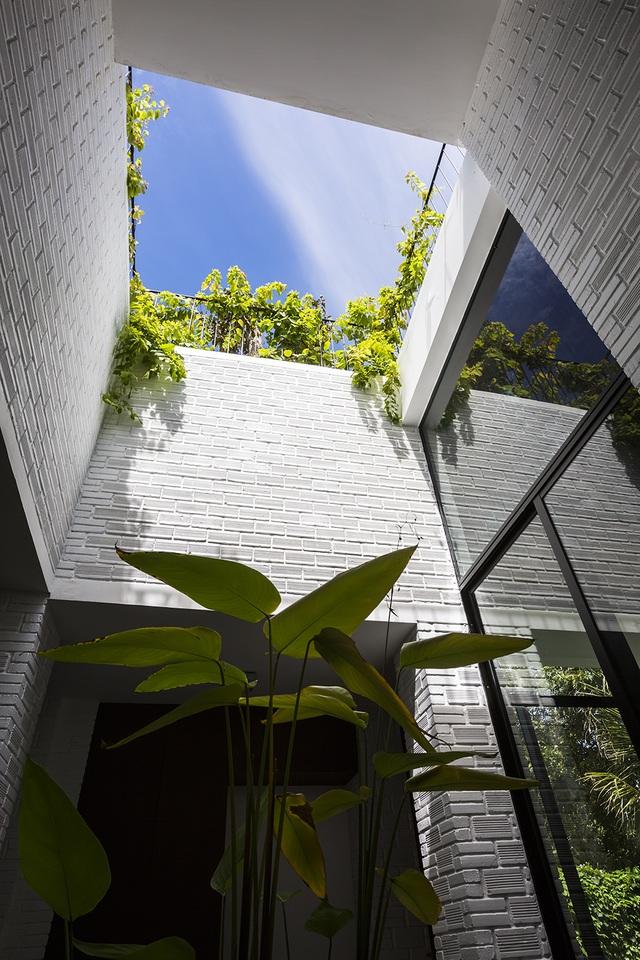 """Biệt thự """"độc nhất, vô nhị"""" trồng cả rừng cây trên mái nhà ở Nha Trang - 8"""