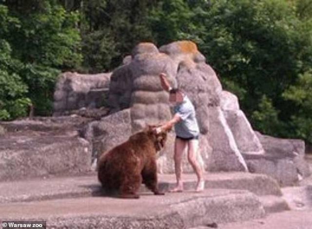 Người đàn ông say rượu mò vào vườn thú vật nhau với gấu - 3
