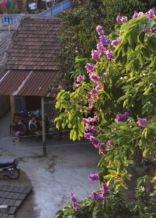 Huế - Thành phố của những sắc hoa mùa hạ - 6