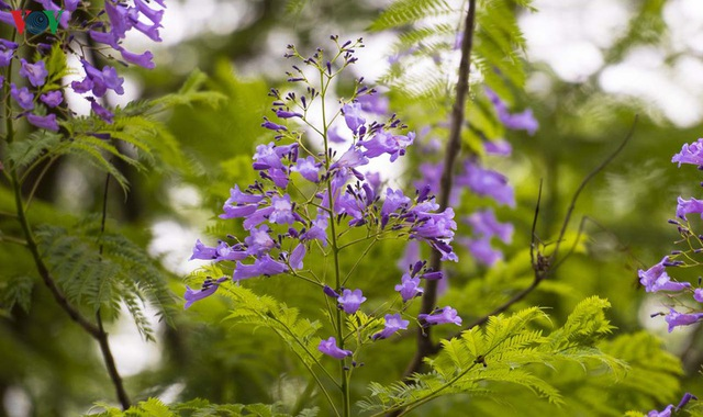 Huế - Thành phố của những sắc hoa mùa hạ - 9