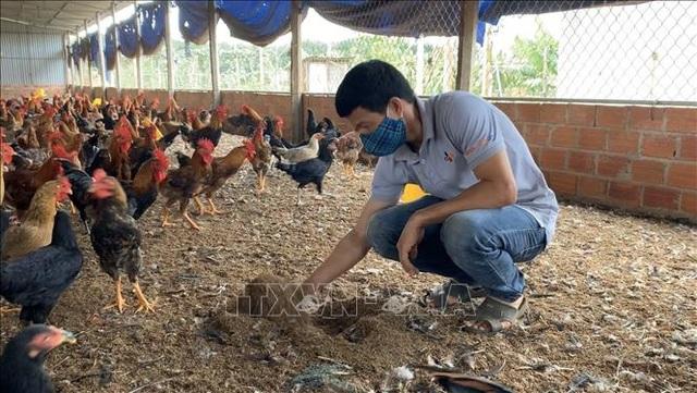 Mô hình nuôi gà trên đệm lót sinh học cho thu nhập 400 triệu đồng/năm - 1