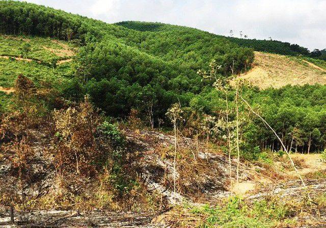 Cán bộ giữ rừng lập khống hồ sơ bồi thường để chia nhau hơn 5 tỷ đồng - 1