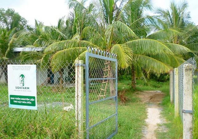Trồng dừa chưa kịp ra trái đã hái được khối tiền ở Trà Vinh - 1