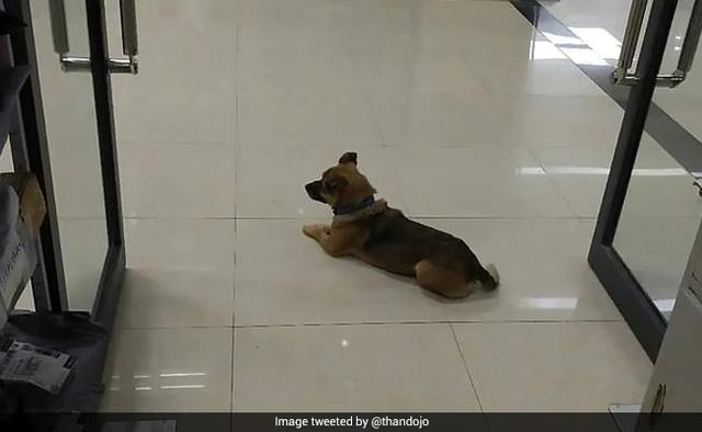 Cảm động chú chó đợi chủ đã qua đời tại bệnh viện ròng rã 3 tháng - 1