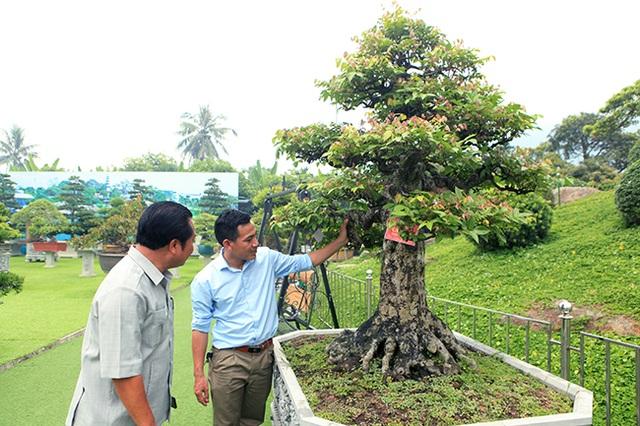 Đại gia Thái Nguyên dốc tiền khủng chơi dàn bonsai khế, coi như báu vật trong nhà - 1
