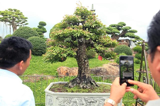 Đại gia Thái Nguyên dốc tiền khủng chơi dàn bonsai khế, coi như báu vật trong nhà - 2