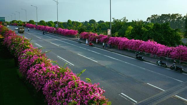 """Phát sốt"""" với con đường hoa giấy đẹp quên lối về ngay gần Hà Nội - 3"""