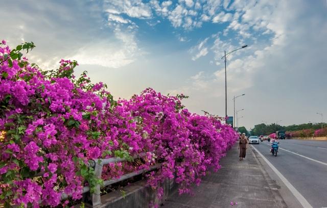 """Phát sốt"""" với con đường hoa giấy đẹp quên lối về ngay gần Hà Nội - 4"""