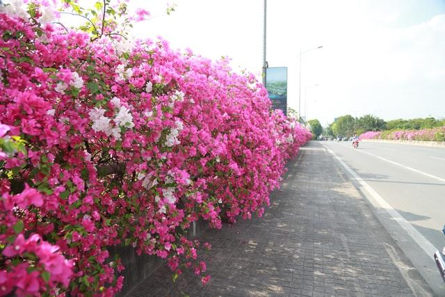 """Phát sốt"""" với con đường hoa giấy đẹp quên lối về ngay gần Hà Nội - 5"""