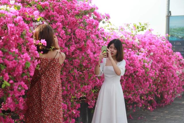 """Phát sốt"""" với con đường hoa giấy đẹp quên lối về ngay gần Hà Nội - 6"""