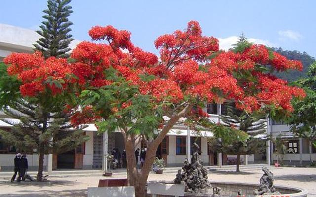 Tâm sự của cây xanh trong trường học - 1