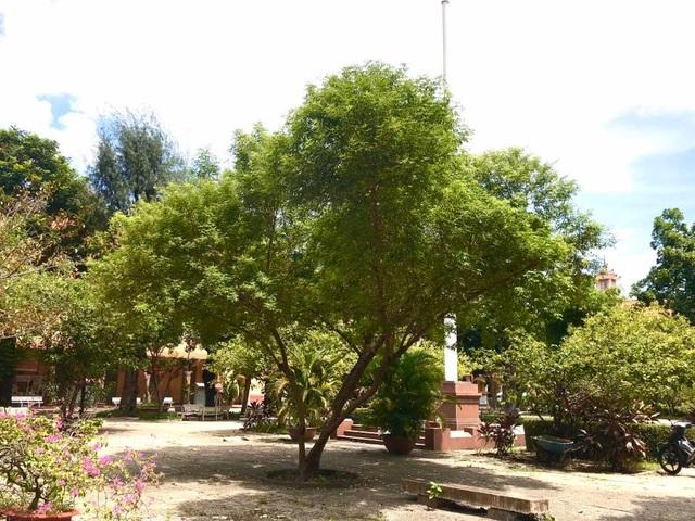 Lo cây xanh bị hạ tràn lan, Trung tâm Bảo tồn Thiên nhiên gửi tâm thư - 2