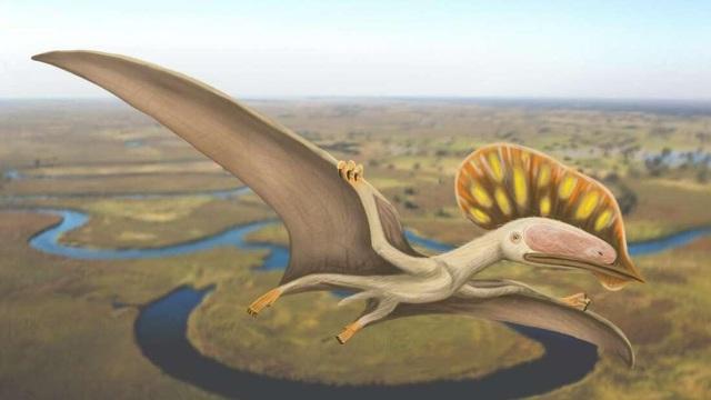 Phát hiện hoá thạch của loài Dực long chưa từng được biết đến tại Anh - 1