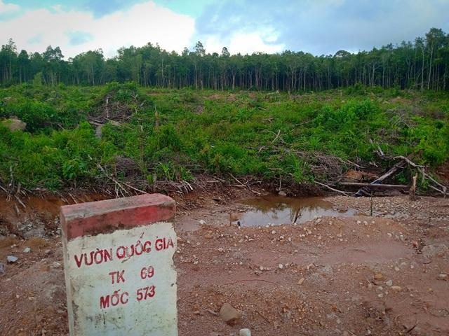 Hơn 8ha rừng bị chặt phá, 4 lần lập biên bản nhưng... không biết thủ phạm? - 1