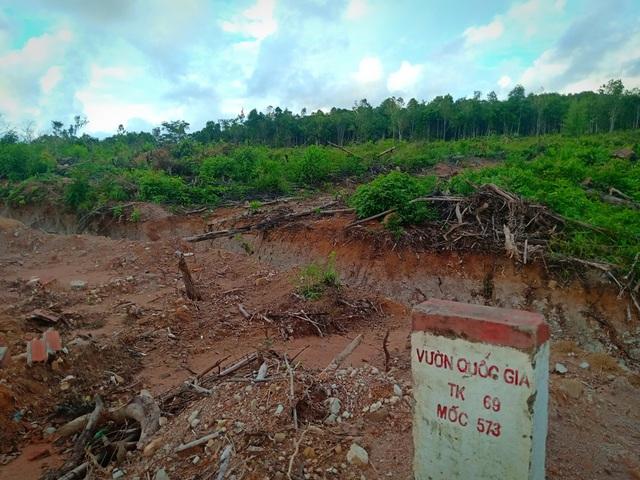Hơn 8ha rừng bị chặt phá, 4 lần lập biên bản nhưng... không biết thủ phạm? - 2