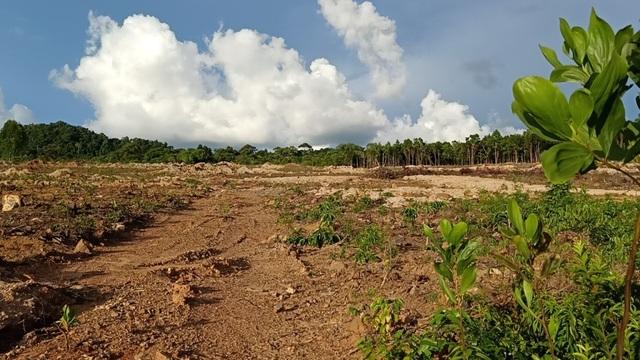 Hơn 8ha rừng bị chặt phá, 4 lần lập biên bản nhưng... không biết thủ phạm? - 4