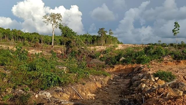 Hơn 8ha rừng bị chặt phá, 4 lần lập biên bản nhưng... không biết thủ phạm? - 5