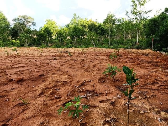 Hơn 8ha rừng bị chặt phá, 4 lần lập biên bản nhưng... không biết thủ phạm? - 7