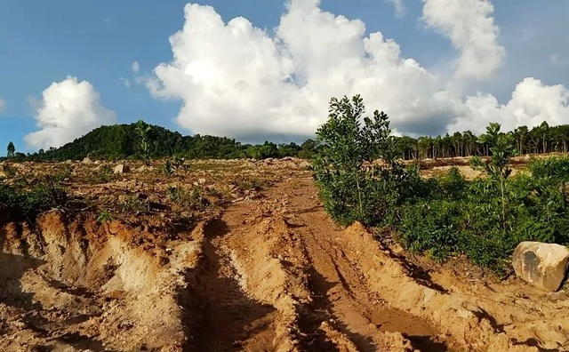 Hơn 8ha rừng bị chặt phá, 4 lần lập biên bản nhưng... không biết thủ phạm? - 6