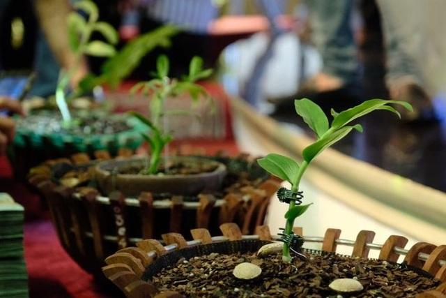 Ngắm vườn lan đột biến, giá trị gần 10 tỷ đồng tại Mê Linh - 1
