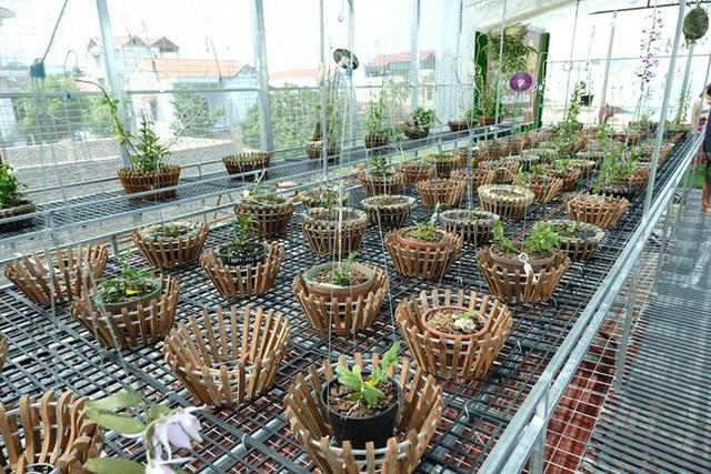 Ngắm vườn lan đột biến, giá trị gần 10 tỷ đồng tại Mê Linh - 10