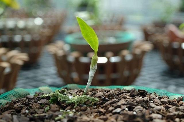 Ngắm vườn lan đột biến, giá trị gần 10 tỷ đồng tại Mê Linh - 2