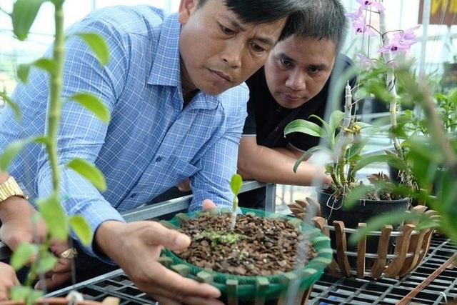 Ngắm vườn lan đột biến, giá trị gần 10 tỷ đồng tại Mê Linh - 3
