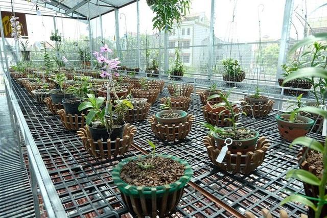 Ngắm vườn lan đột biến, giá trị gần 10 tỷ đồng tại Mê Linh - 4