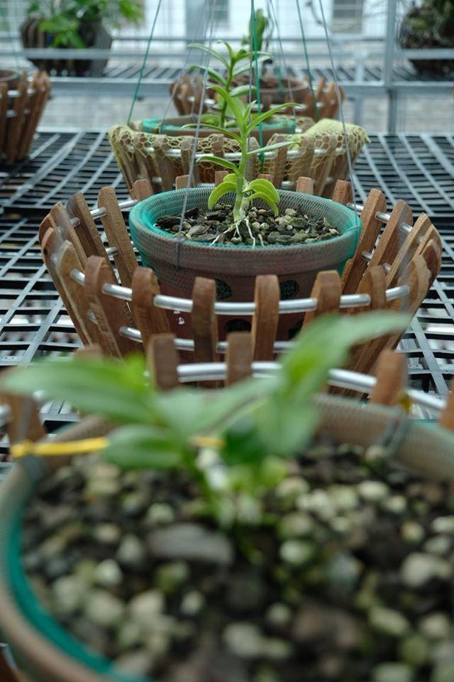 Ngắm vườn lan đột biến, giá trị gần 10 tỷ đồng tại Mê Linh - 5