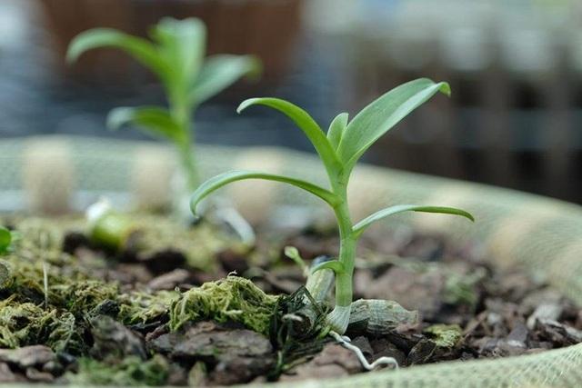 Ngắm vườn lan đột biến, giá trị gần 10 tỷ đồng tại Mê Linh - 6
