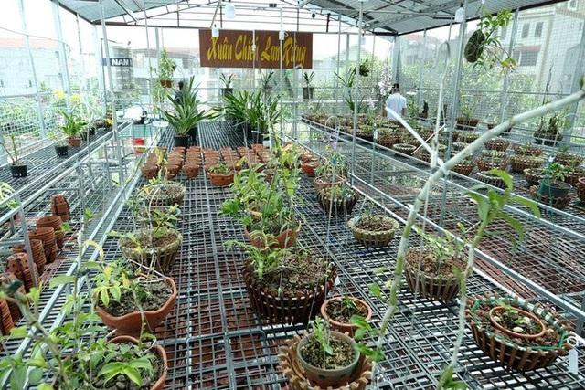 Ngắm vườn lan đột biến, giá trị gần 10 tỷ đồng tại Mê Linh - 8
