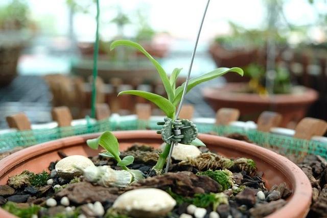 Ngắm vườn lan đột biến, giá trị gần 10 tỷ đồng tại Mê Linh - 9