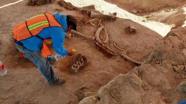Phát hiện thêm nhiều bộ xương voi ma mút bên dưới sân bay Mexico - 1