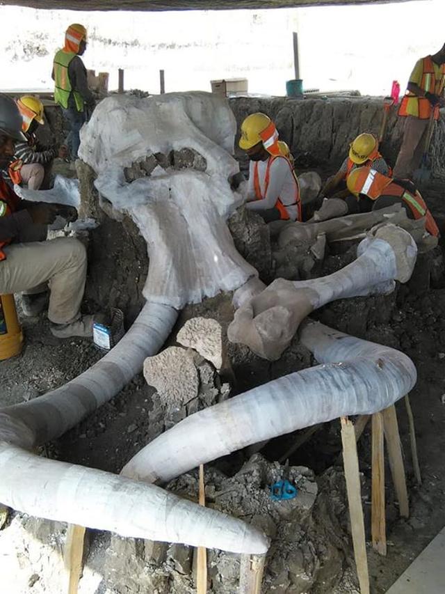 Phát hiện thêm nhiều bộ xương voi ma mút bên dưới sân bay Mexico - 3