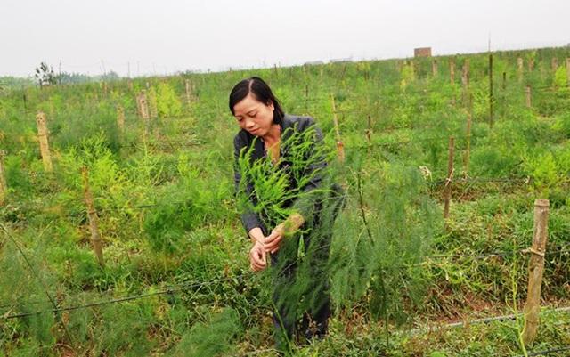 """Trồng cây """"rau vua"""", nuôi con đặc sản, nông dân nhanh giàu - 2"""